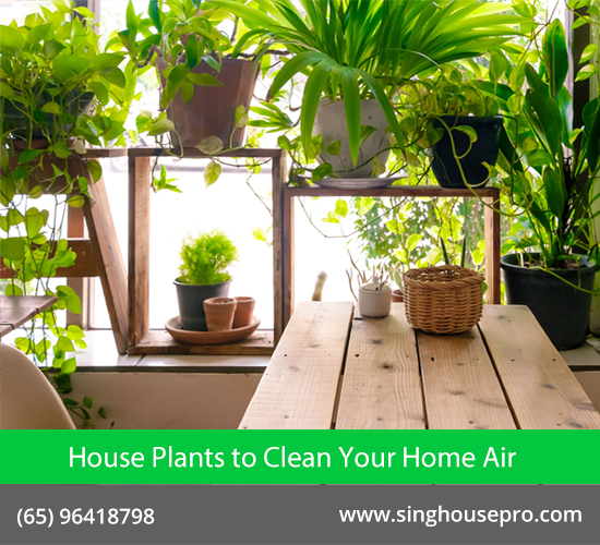 Know The Efficiency of House Plants to Clean Your Home Air