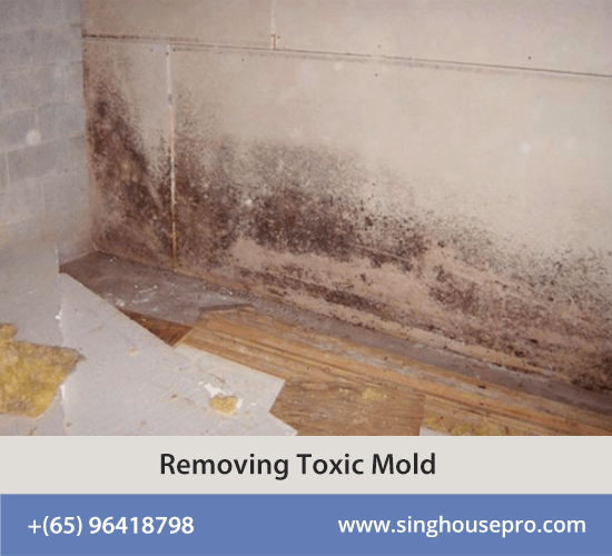 Removing Toxic Mold
